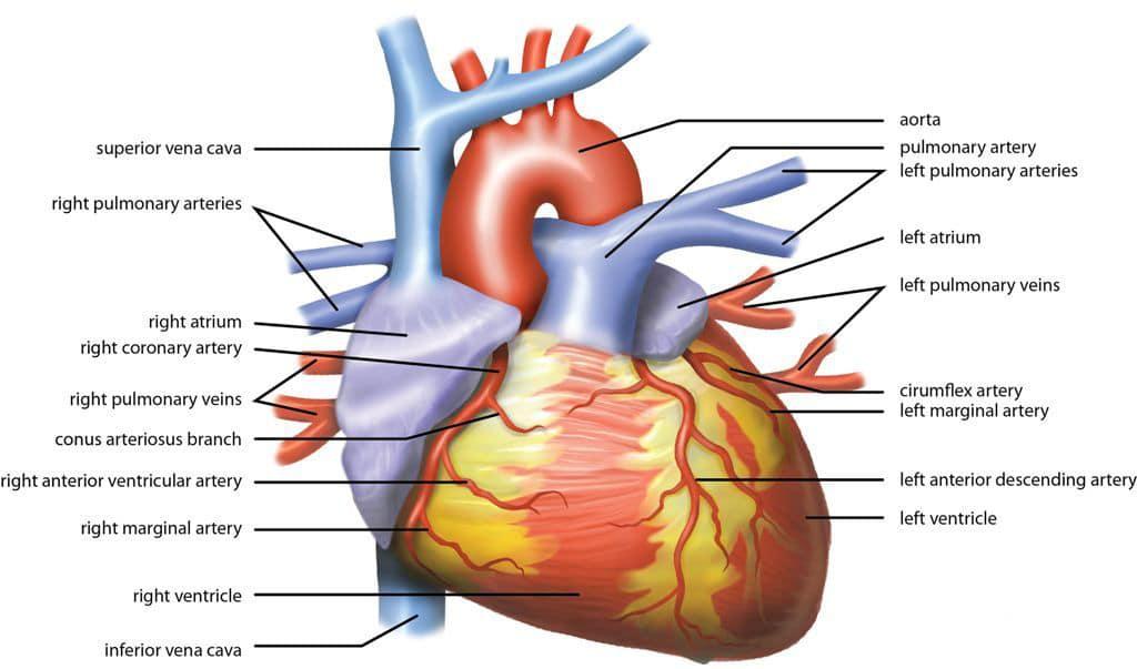 life insurance heart stents life insurance angioplasty life insurance stent life insurance after stent life insurance PTCA